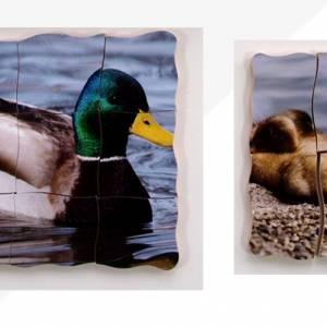 TRAY PUZZLES – LIFE CYCLES DUCK