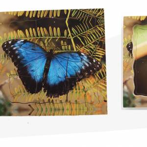 TRAY PUZZLES – LIFE CYCLES BUTTERFLY