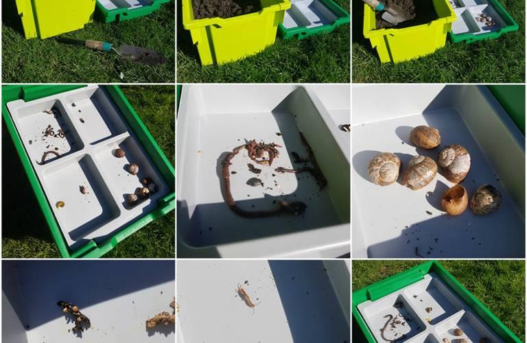 Outdoor Bug Hunt